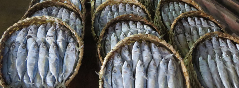 New project in support of Cambodia's marine fishery exports