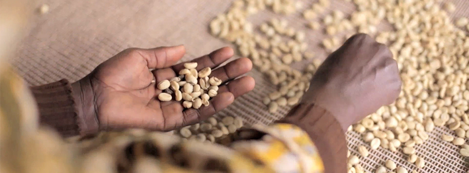 The perfect cup: boosting inclusive and sustainable industrial development in Burundi