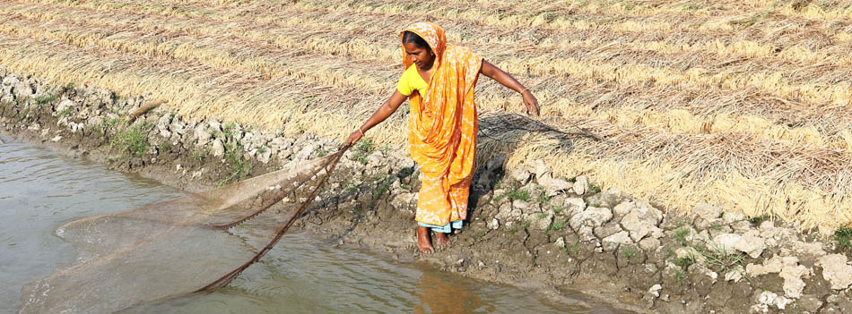 Empowering women in Bangladesh's shrimp production sector